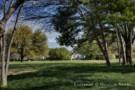 Grassy Meadow on the Crespi Hicks Estate in Dallas, Texas