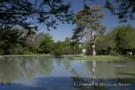 Pond on the Crespi Hicks Property