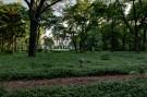 Several Paths Run through the Crespi Hicks Estate Property