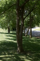 Informal Drive Along Trees in Mayflower Estates