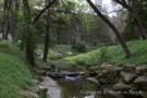 Stream Running Through Forest on Dallas Estate Property