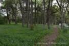 Wilderness Path on Mayflower Estates Property
