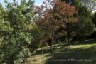 Landscape on Property of Glen Abbey Home