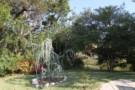 Sapling Growing in Garden Beside Architect Gary Cunningham Designed Home